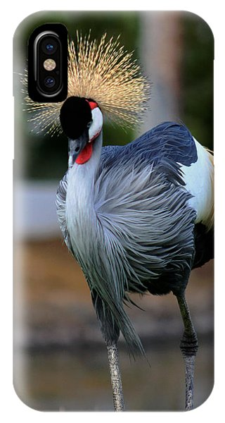 African Crowned Crane Running IPhone Case