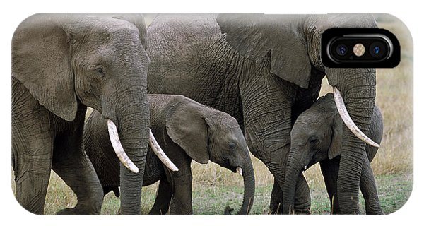 East Africa iPhone Case - African Elephant Females And Calves by Yva Momatiuk and John Eastcott