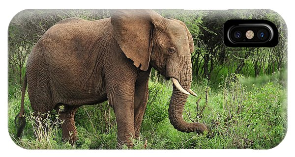 East Africa iPhone Case - African Elephant Grazing Serengeti by Thomas Marent