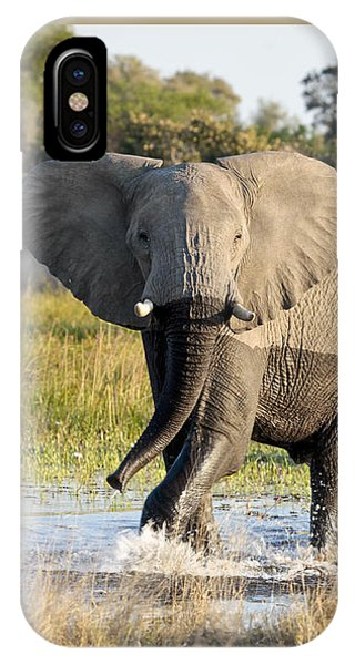 African Elephant Mock-charging IPhone Case