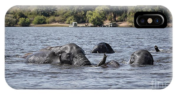 African Elephants Swimming In The Chobe River IPhone Case