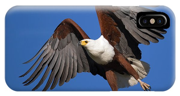 Wings iPhone Case - African Fish Eagle by Johan Swanepoel