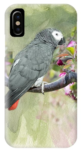 African Gray Among The Blossoms IPhone Case