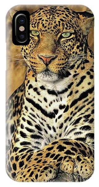 African Leopard Portrait Wildlife Rescue IPhone Case