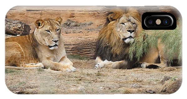 African Lion Couple 2 IPhone Case