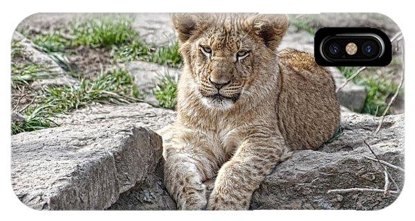 Beast iPhone Case - African Lion Cub by Tom Mc Nemar
