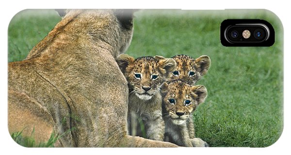 African Lion Cubs Study The Photographer Tanzania IPhone Case