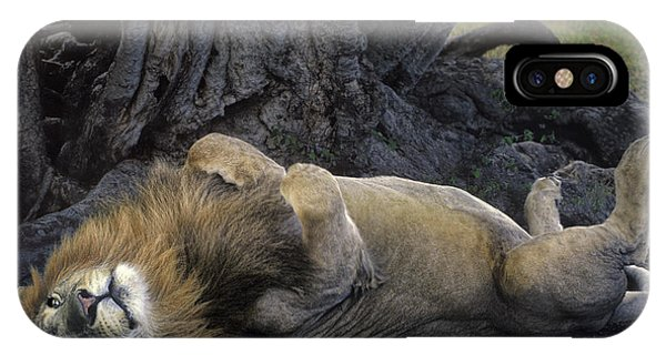 IPhone Case featuring the photograph African Lion Panthera Leo Wild Kenya by Dave Welling