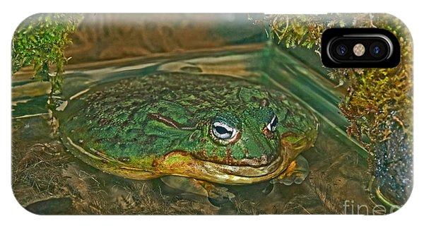 African Pixie Frog In Water IPhone Case