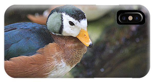 African Pygmy Goose IPhone Case