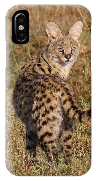 African Serval Cat 1 IPhone Case