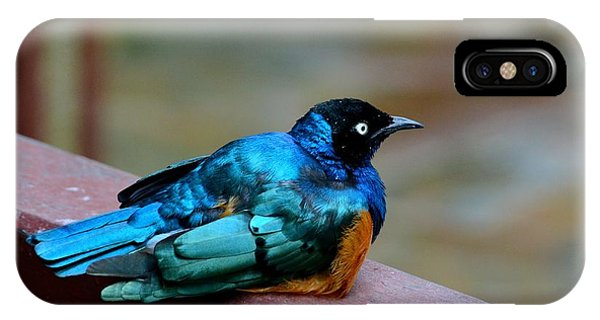 African Superb Starling Bird Rests On Wooden Beam IPhone Case