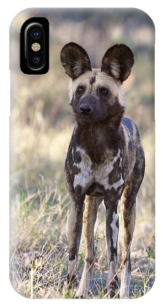 African Wild Dog  Lycaon Pictus IPhone Case