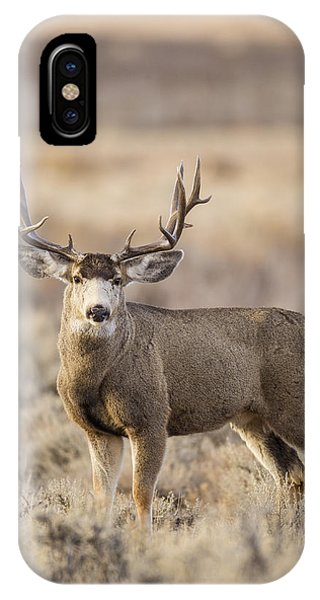 Afternoon Buck IPhone Case