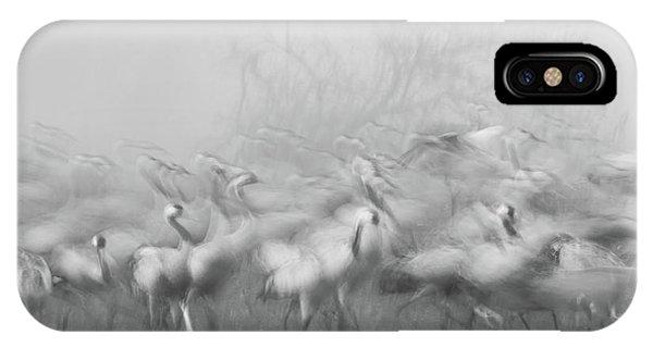 Agamon Hula Phone Case by Amnon Eichelberg
