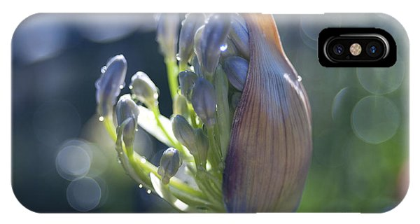 Agapanthus Coming To Life IPhone Case