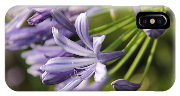 Agapanthus Flower Close-up IPhone Case
