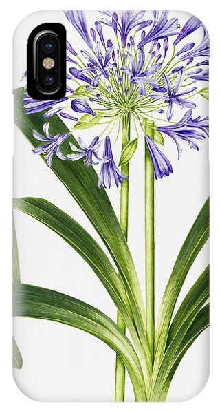 Botanical iPhone Case - Agapanthus by Sally Crosthwaite