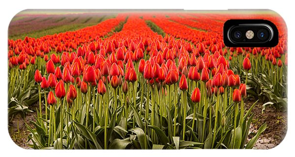 Wheeler Farm iPhone Case - Agassiz Tulip Festival by James Wheeler