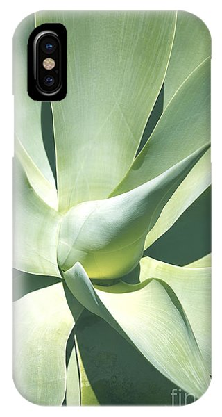 Agave Plant 1 IPhone Case