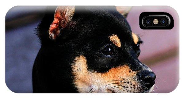 Agie - Chihuahua Pitbull IPhone Case