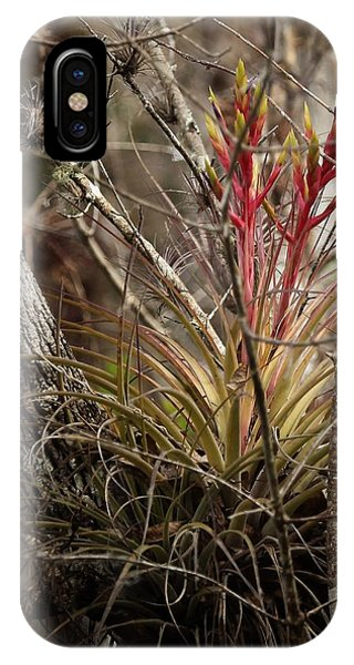 Air Plant IPhone Case
