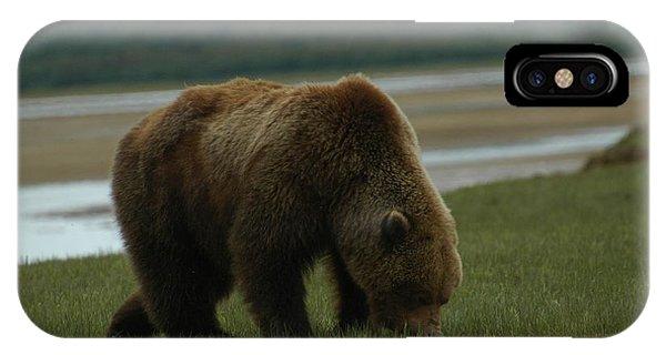 Alaska Brown Bear IPhone Case