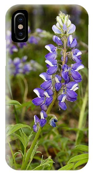 Alaskan Lupine In Denali Park IPhone Case