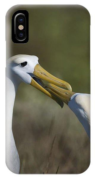 Albatross Courtship IPhone Case