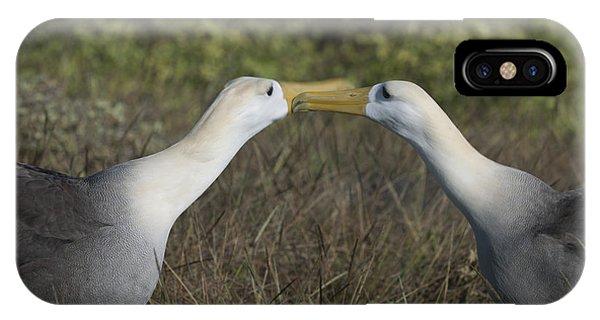 Albatross Perform Courtship Ritual IPhone Case