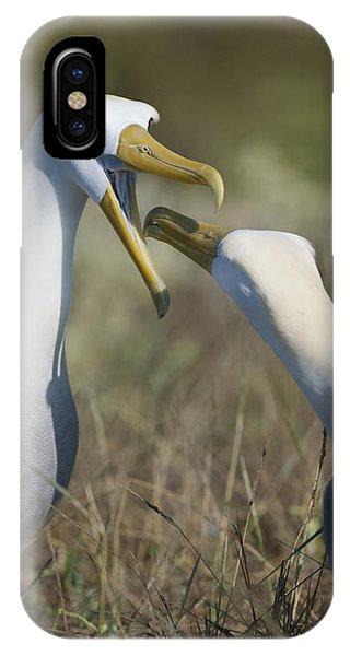 Albatross Perform Mating Ritual IPhone Case