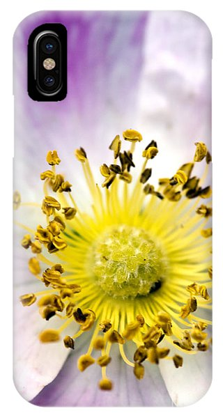 Alberta Wild Rose IPhone Case