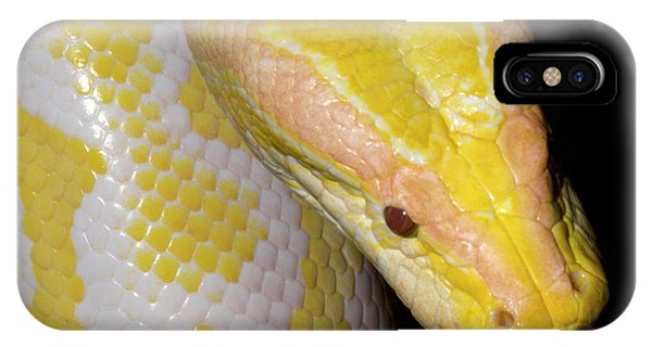 Albino Burmese Python IPhone Case