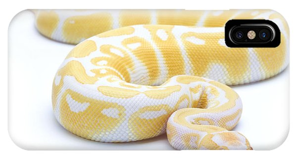 Burmese Python iPhone Case - Albino Royal Python by Michel Gunther