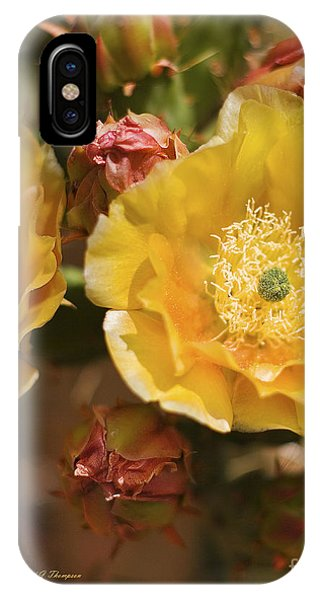 'albispina' Cactus #2 IPhone Case