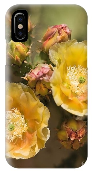 'albispina' Cactus Blooms IPhone Case