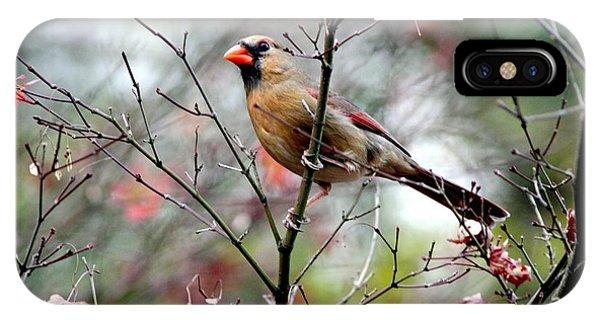 Alert - Northern Cardinal IPhone Case
