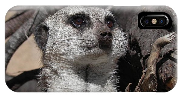 iPhone Case - Alert Meerkat by Adrienne Petterson