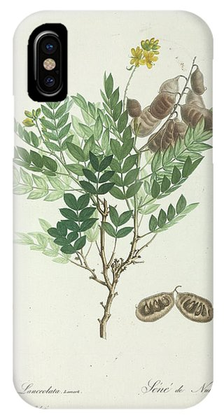 North London iPhone Case - Alexandrian Senna by Natural History Museum, London/science Photo Library