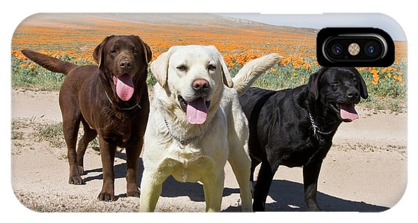 Yellow Lab iPhone Case - All Three Colors Of Labrador Retrievers by Zandria Muench Beraldo
