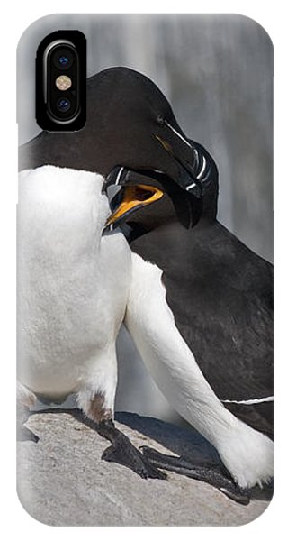 Razorbill iPhone Case - All You Need Is Love... by Nina Stavlund