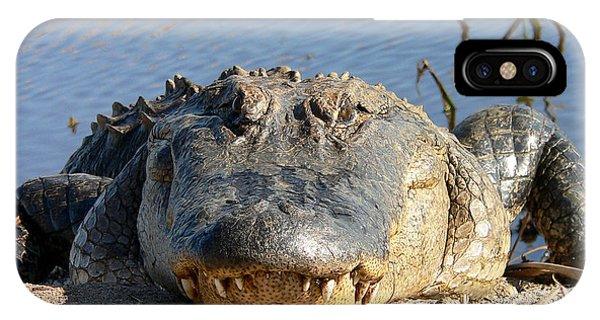 Alligator Approach IPhone Case