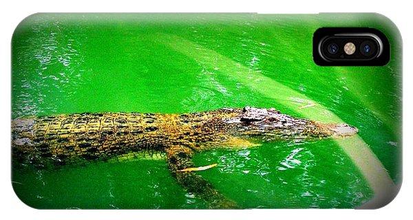 Alligator In Australia Phone Case by John Potts