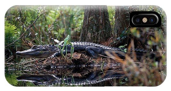 Alligator In Okefenokee Swamp IPhone Case