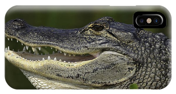 Alligator With Mouth Open IPhone Case