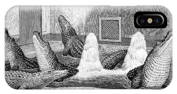 Alligators In Captivity IPhone Case