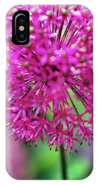 Monocotyledon iPhone Case - Allium Giganteum by Rachel Warne/science Photo Library