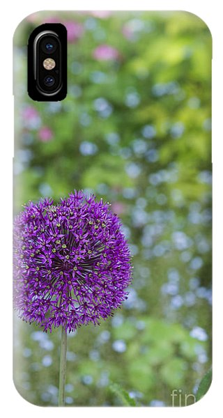 Allium Hollandicum Purple Sensation Flower IPhone Case