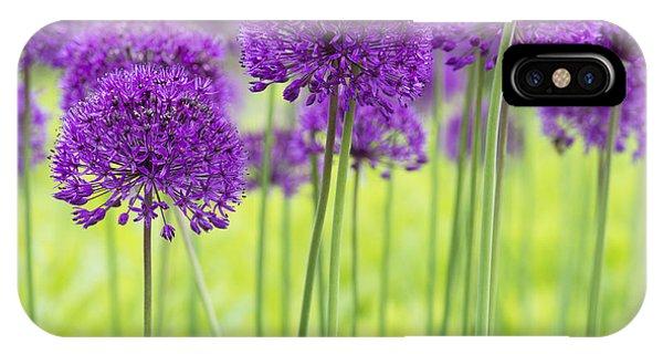 Allium Hollandicum Purple Sensation Flowers IPhone Case