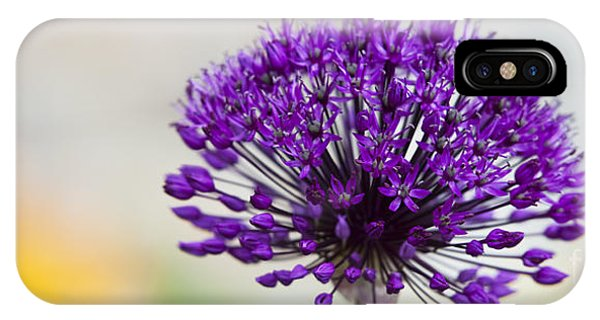 Allium Hollandicum Purple Sensation Panoramic IPhone Case